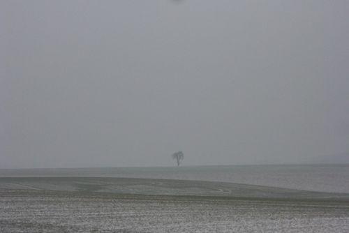 Petit arbre de neige