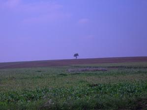 Dscn6716_le_petit_arbre_est_seul