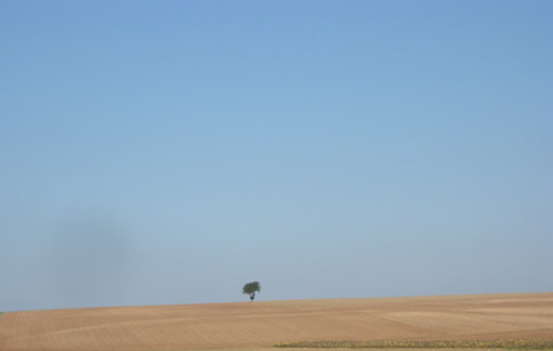Dscn6070_le_petit_arbre_et_le_dsert